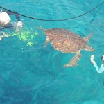 swimming with turtle photo By: Avia